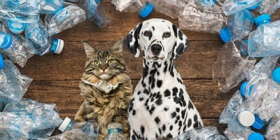 Dalmatian dog with Maine Coon cat surrounded by plastic