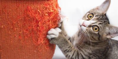 Katzen das Kratzen abgewöhnen: So geht es!