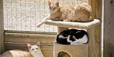 Cómo comprar una torre trepadora para gato