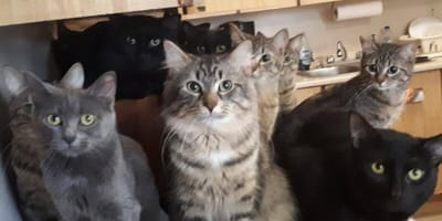 Woman calls for help as she is up to her neck in kitties