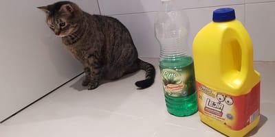 gatos productos limpieza