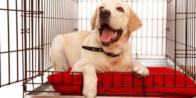 Klatka kennelowa dla psa. Co warto o niej wiedzieć i jak z niej korzystać?