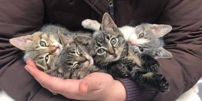 4-mici-tra-le-braccia-del-veterinario