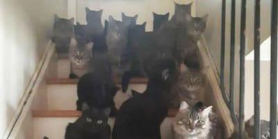 gatti-ovunque-sulle-scale