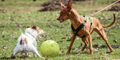 Aggressiver Hund: Was tun, wenn der Hund plötzlich knurrt und beißt?