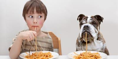 Makaron w diecie psa - jaki wybrać i w jakich ilościach podawać?