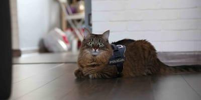 Krakowska policja informuje, że zatrudniła nietypowego czworonoga. Co kot robi w jej szeregach?