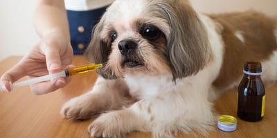 Condroprotectores para perros