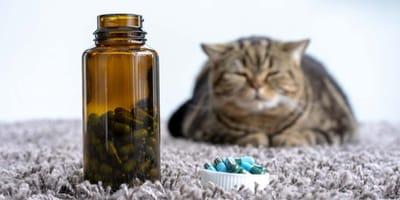 gato intentando comer pastillas