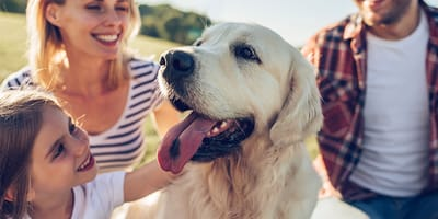 ¿Dónde les gusta a los perros que les rasquen?
