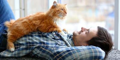 soñar con gatos significado
