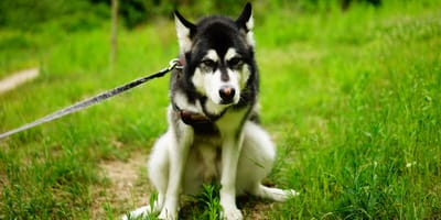 Wenn die Verstopfung plagt: Hausmittel für Hunde