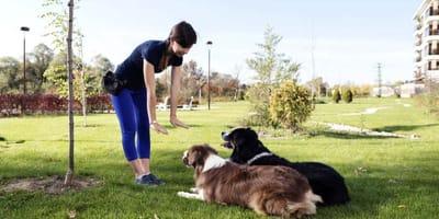 Buscar adiestrador de perros