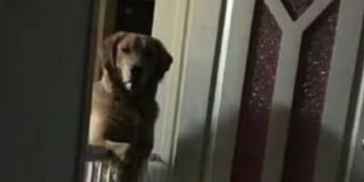 Il cane li fissa di notte: la ragione è straziante (Video)