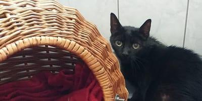 gatto nero e cesta