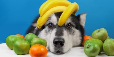Welches Obst dürfen Hunde fressen, welches nicht?