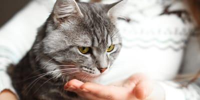 probiotyk dla kota