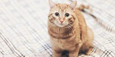 Dlaczego kot sika na łóżko? Poznaj możliwe przyczyny