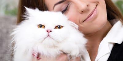 Poznaj 6 ras łagodnych i spokojnych kotów domowych