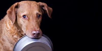 Hund mit Napf im Maul