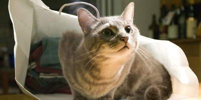 Cosas indispensables para un gato: esto es lo que debes tener en casa si vives con un minino