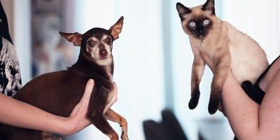 Kto was kocha bardziej: kot czy pies? Naukowcy mają odpowiedź