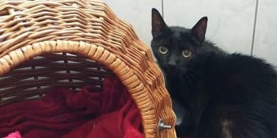 Czarny kot.