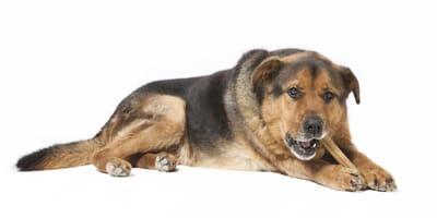 Składniki odżywcze i witaminy dla psa seniora – czego potrzebuje starszy pies i jak go karmić?