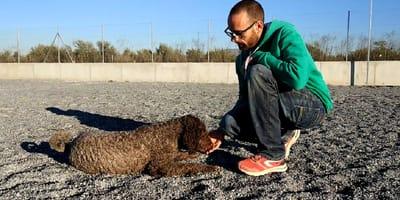 Cómo enseñarle a un perro a echarse