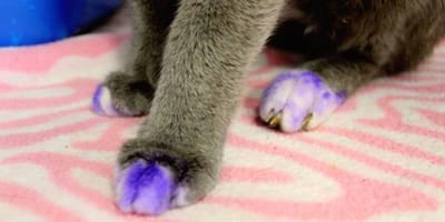 Fioletowe łapy u kota są śladem bardzo smutnej przeszłości