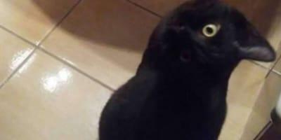 gato o cuervo ilusión óptica imagen viral