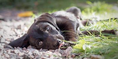 cane-sdraiato-per-terra