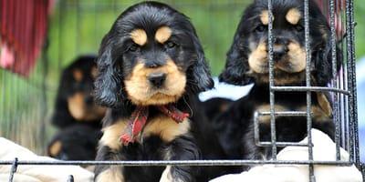 Pensión para perros: ¿es buena opción para viajar?