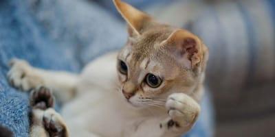 gatos amamantar