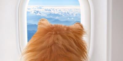 Hundekopf schaut aus Flugzeugfenster