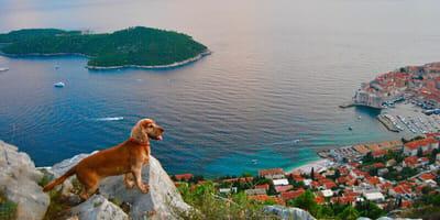 Hund an Strand in Kroatien