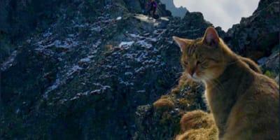 Kot siedzący na szczycie góry.