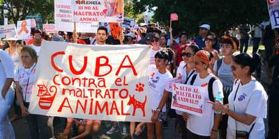 Il popolo cubano dalla parte dei cani randagi
