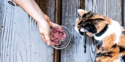 Die Katze barfen: Fragen und Antworten