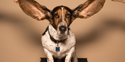 Best home remedies for ear mites in dogs