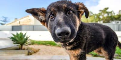 Juegos de olfato para perros divertidísimos contra el aburrimiento