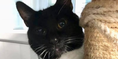 Lady the cat has been waiting in the shelter for a new home for 430 days