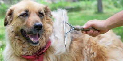 Haarige Zeiten: Der Fellwechsel beim Hund