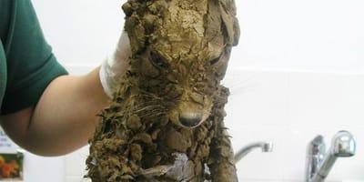 Error fatal: salvan a un cachorro de ahogarse en lodo... pero hay algo que no cuadra