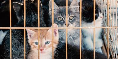 Gatos en adopción en Barcelona: lista de refugios y asociaciones a las que acudir