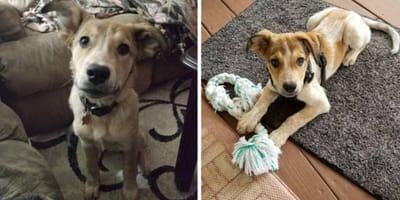 """Zaadoptowali porzuconego psa, ale weterynarz popełnia """"wielką"""" pomyłkę"""