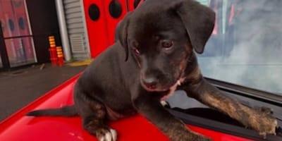 bomberos rescatan cachorrito parís