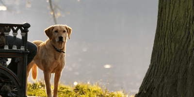 8 signs your dog has dementia