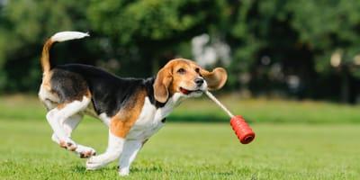 Poznaj zabawki dla psa na inteligencję!