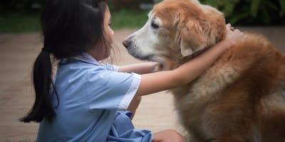 Jak karmić i opiekować się psem seniorem?